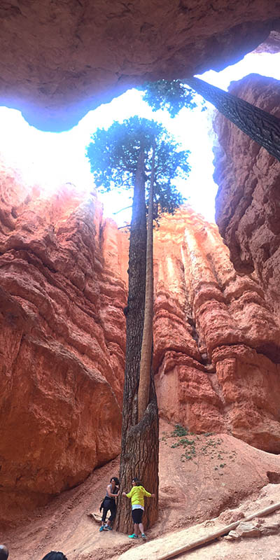 Navajo Loop Trail, Bryce Canyon