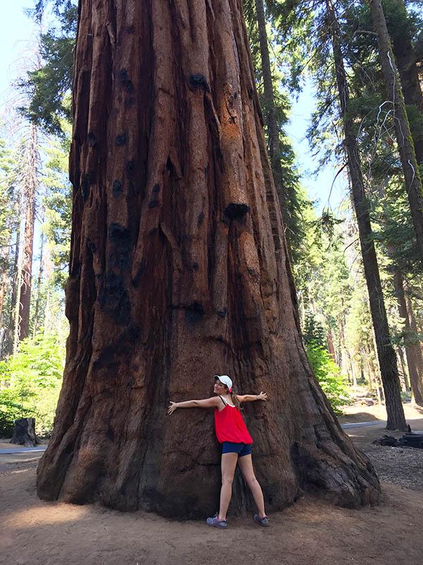 abbracciare sequoie giganti